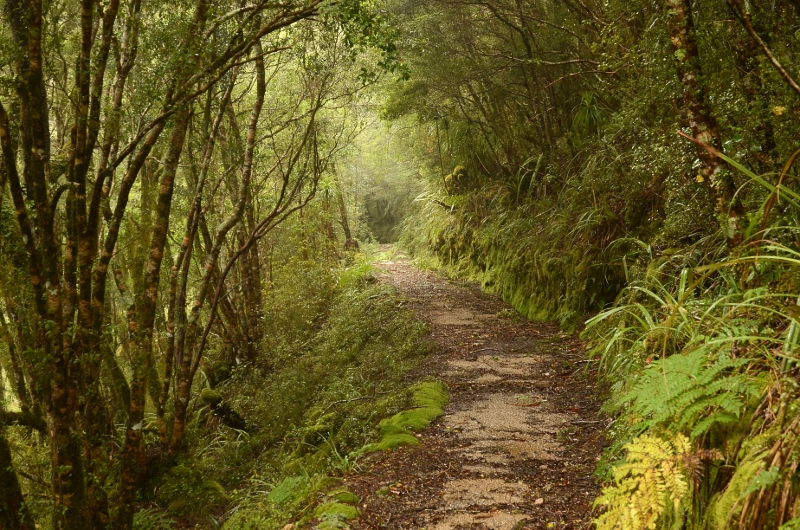 15. Terrängen växlade ständigt mellan skog och öppen mark.