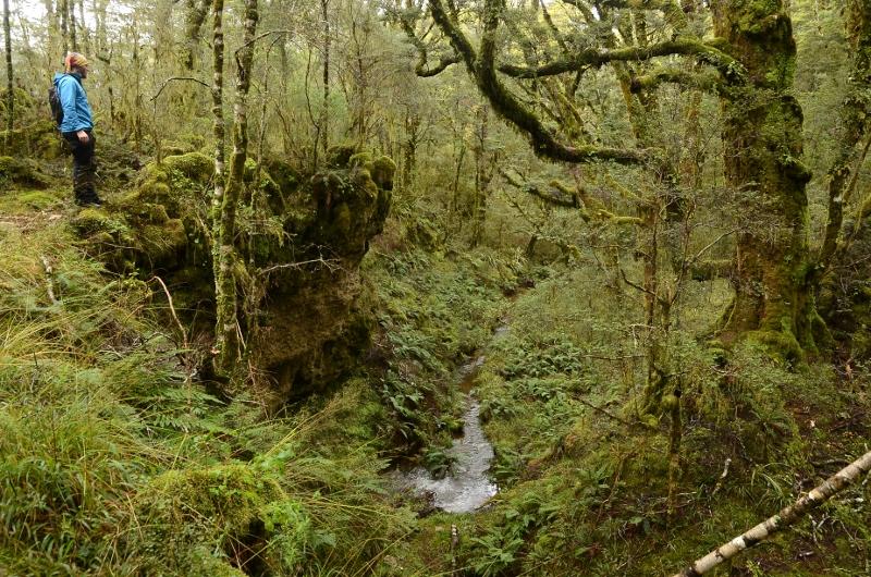 20. Ravin i skogspartiet i anslutning till Gouland Downs Hut.