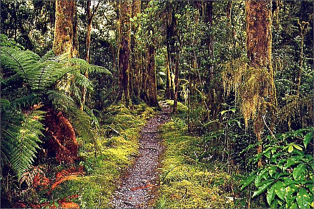 Rainforest, Milford Track, New Zealand.