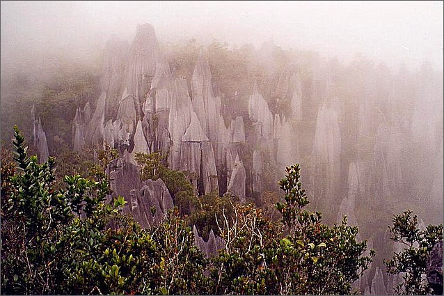The Pinnacles, Gunung Mulu, Borneo, Malaysia.