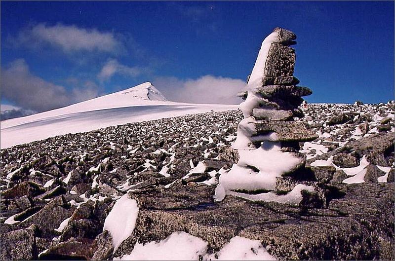 8. Passerar fruset stenröse på väg upp mot Glittertind 2465 meter vars toppkam man ser i bakgrunden.