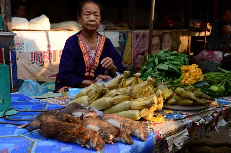 Råttor på Vang Vieng Market.