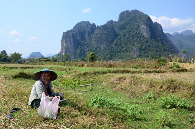 Fältarbetare i Vang Vieng.