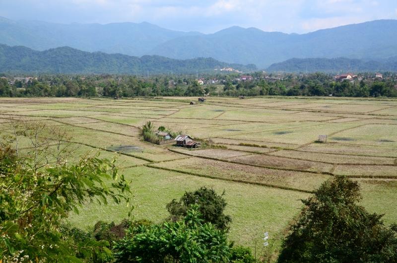 Torra risfält, Vang Vieng.