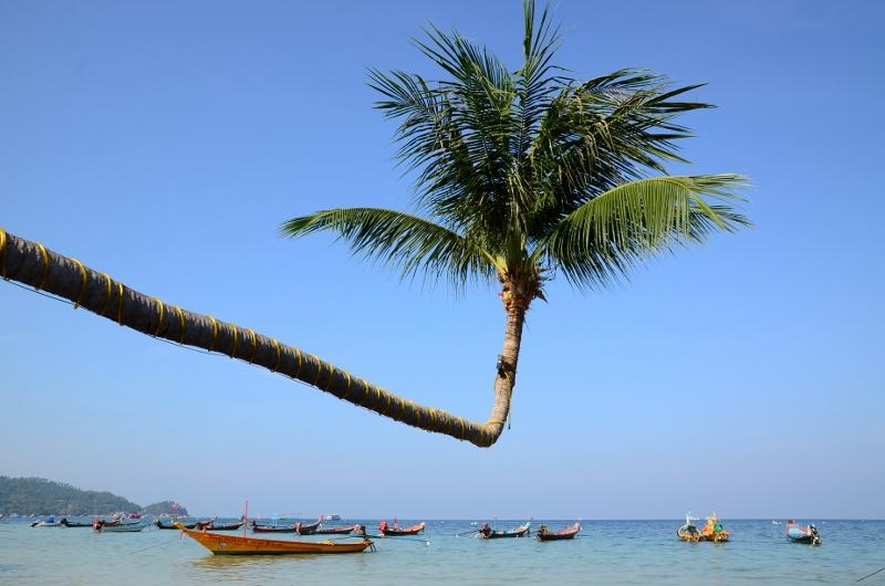 Palm och fiskebåtar vid Sairee Beach, Ko Tao.