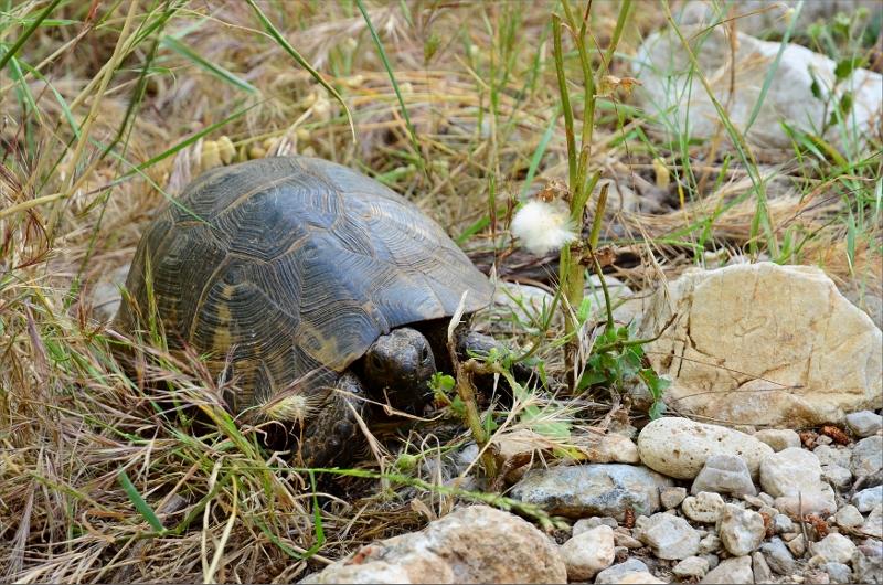 En liten sköldpadda bredvid stigen.