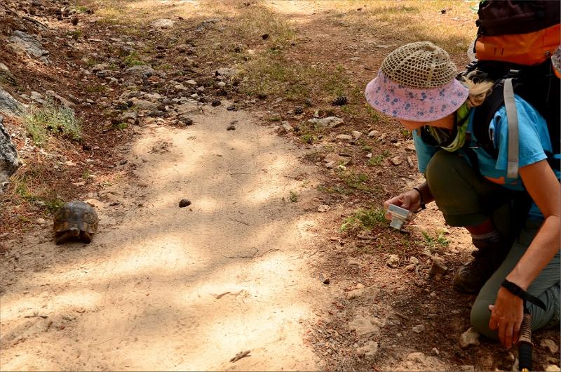 En lite sköldpadda som Olya nästan trampade på. De är svåra att se när de ligger stilla.