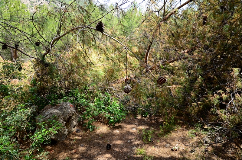Stigen täckt av fallna träd.
