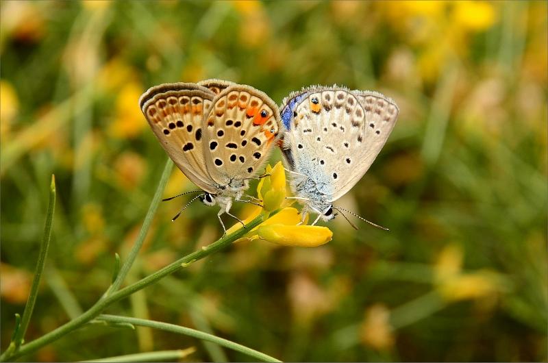 Passerade ett område med mycket fjärilar.