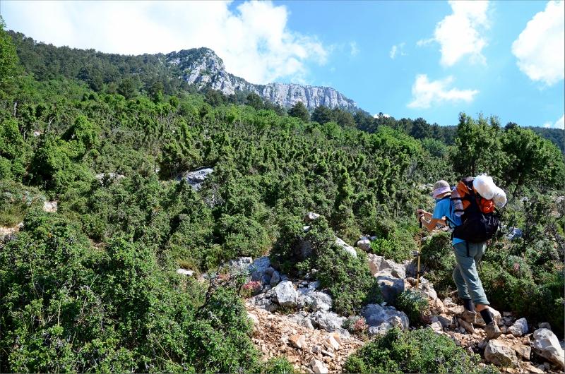 Brant stigning på 1000 höjdmeter i riktning klipporna i bakgrunden.