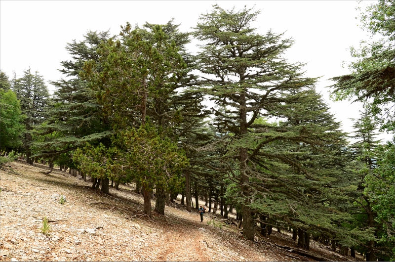 Annorlunda växtlighet på 1700 meters höjd.