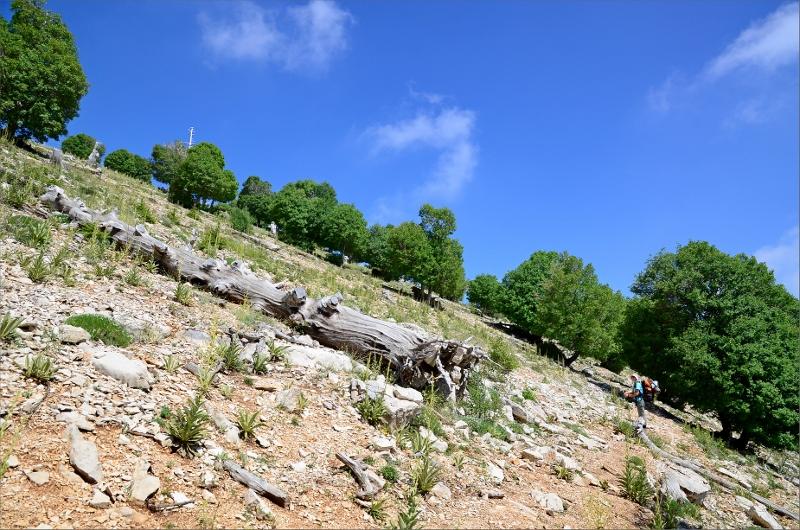 Leden skråar en bit nedanför en bergskam. Olya till höger.