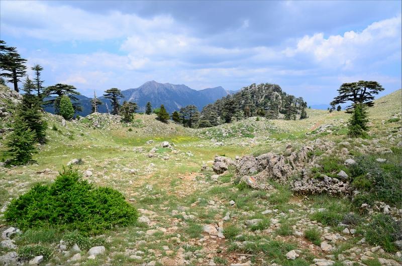 Kort sträcka ovanför trädgränsen och hela ledens högsta punkt 1816 meter.