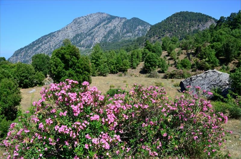 Blommor i Göynuk Valley.