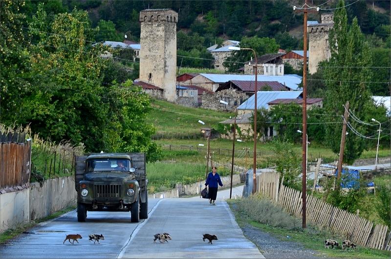 Några griskultingar skyndar sig över vägen framför en gammal lastbil i liten by nära Mestia.