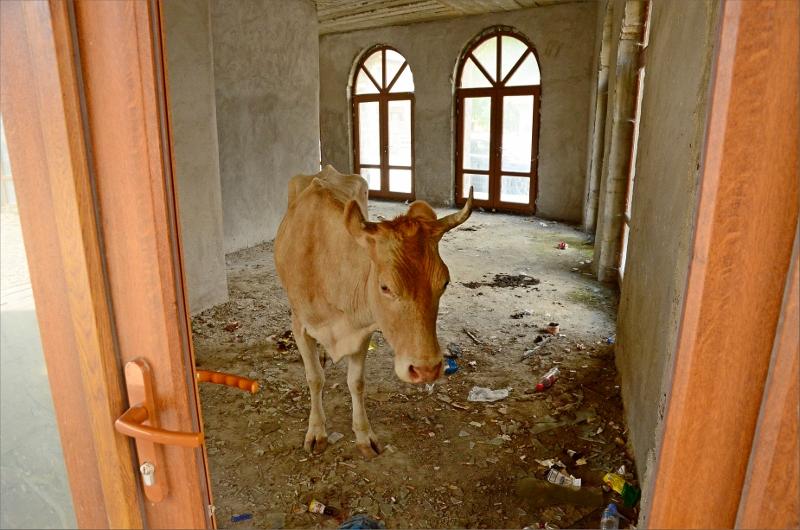 De mest centrala byggnaderna i byn är förfallna och perfekt plats att söka skugga för kossorna.