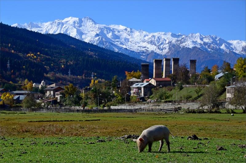 Liten kulting på öppen gräsyta i Mestia och några Svan Towers samt Svanetian Range.