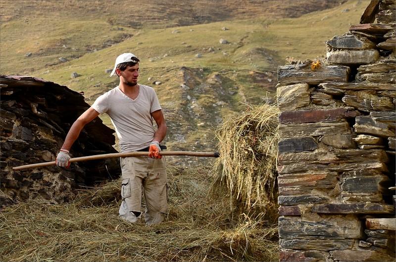 Kille sorterar hö i Ushguli.